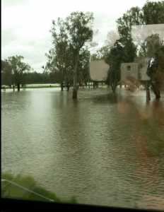 Flooded Murray River near Albury