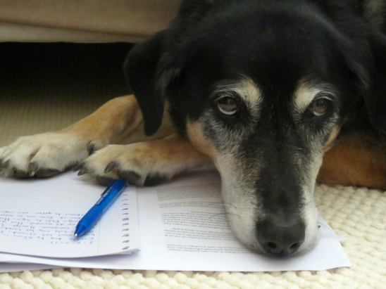 Dog leaning on paper and pen