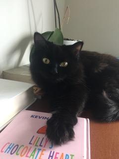 Rain's black cat