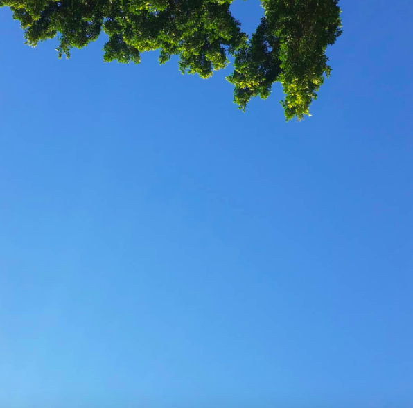 A bright blue sky with the tips of trees at the top of the photograph. I took this photo lying down.